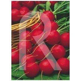 Cinta de semillas de Rabanito redondo rojo