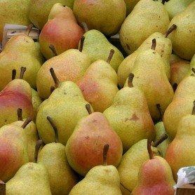 Frutal enano Peral