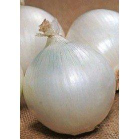 Cebolla blanca de Lisbonne 4 g