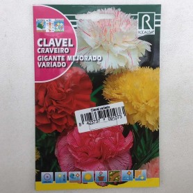 Clavel chabaud variado