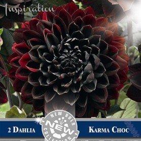 Dalia Karma Choc
