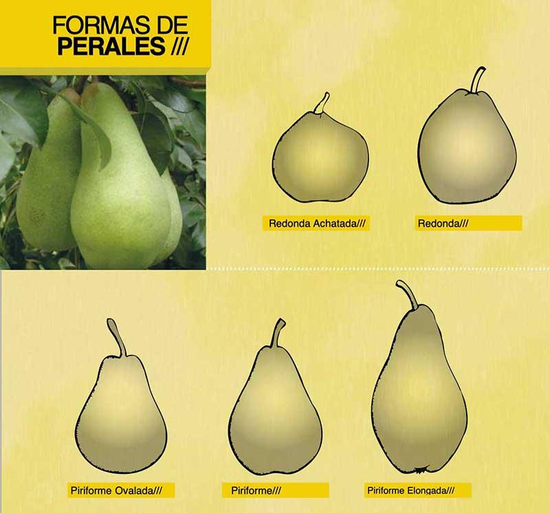 Forma de peras